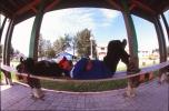 At rest in Moosonee